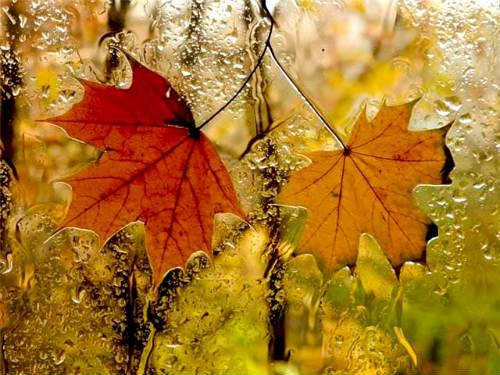 Тихо в комнату дождик стучится. Осень вновь заглянула в мой дом ... Автор Татьяна Лаврова