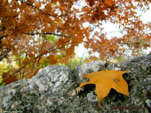 Стихи про осень. Бабье лето.