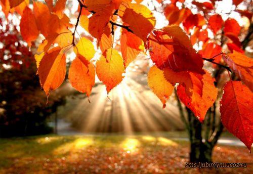 Знаешь, как пахнут осенние листья ... В них отражается солнца Любовь ... Позитивные стихи про осень....