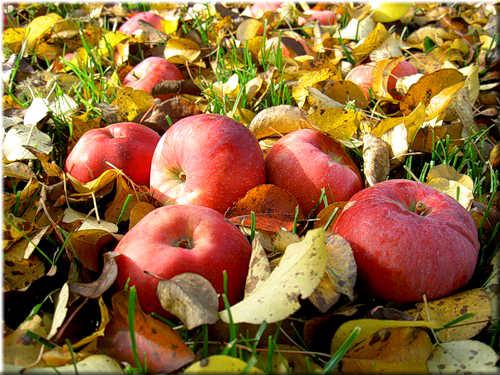 Бьют часы, возвестившие осень .. ударяется яблоко оземь .. Автор Б. Ахмадулина