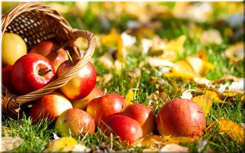 В корзинах фрукты вносят в дом, когда проходит лето .. Автор Лев Квитко