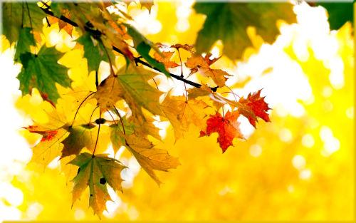 Осень. В золотой карете ... Автор Ю. Капустина