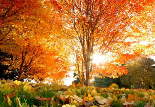 Золотая Осень. Ветер треплет кудри тополиные ... Автор С. Ю. Лизунова