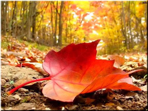 Осенний мотив. Теряет клён своё убранство ... Автор И. Бутримова